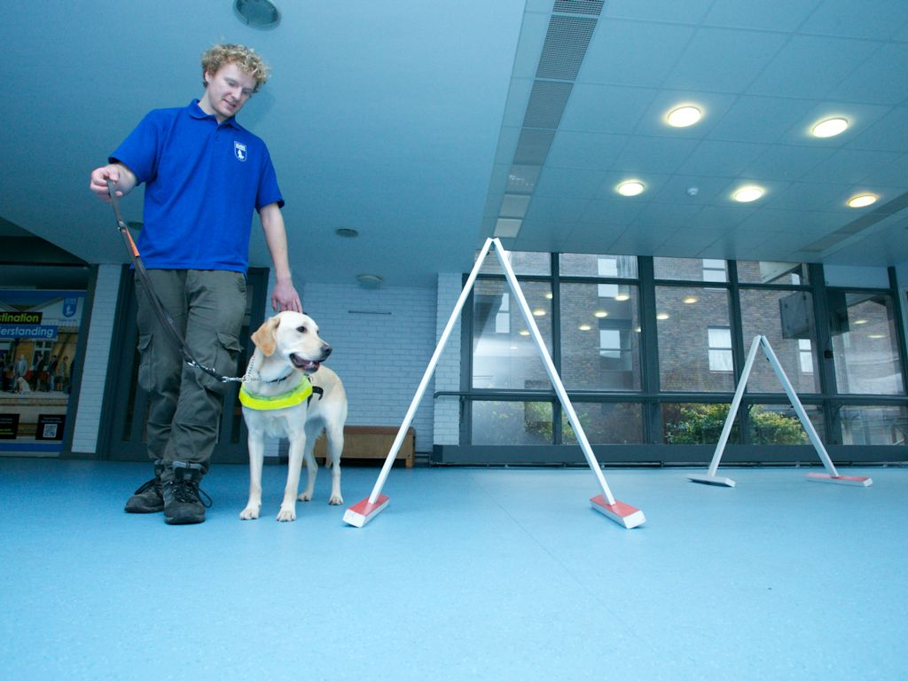 Dogs For The Blind Training